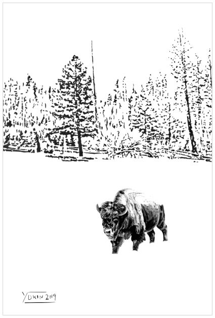 LONELY BISON - Illustration by Yokin.